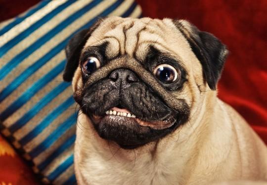 фотография смешной собаки