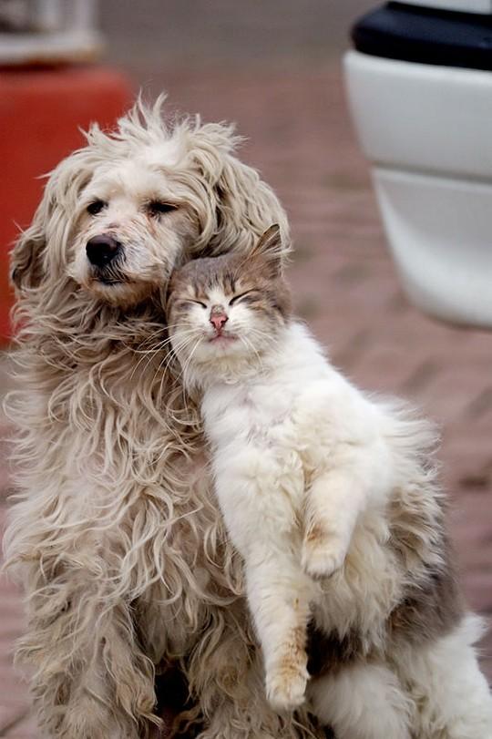 фотография радостных кот и собака