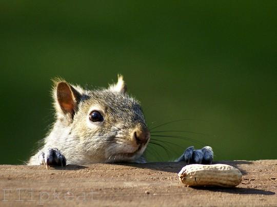 Крадемся за орешком