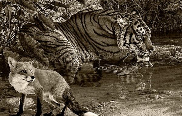 Лиса и тигр