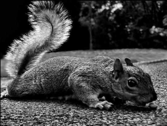 Тянемся за орешком