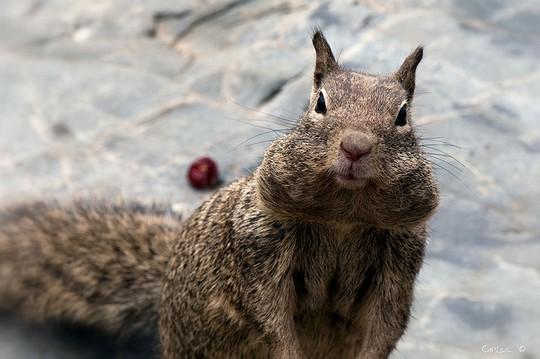 Запаслись орешками