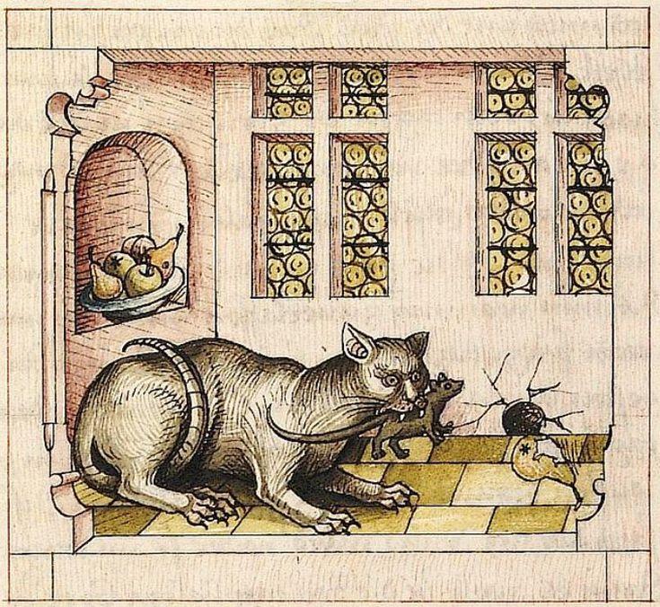 Средневековая миниатюра кошки в книге