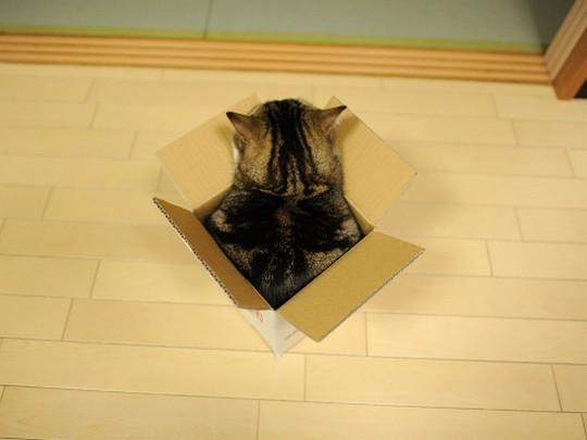 Кот Mapy