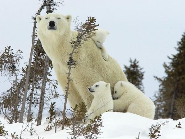 Заботливые мамы и их крохи