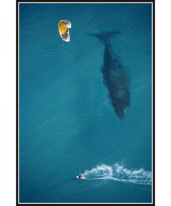 «Над китом», фото: timz45 on Reddit