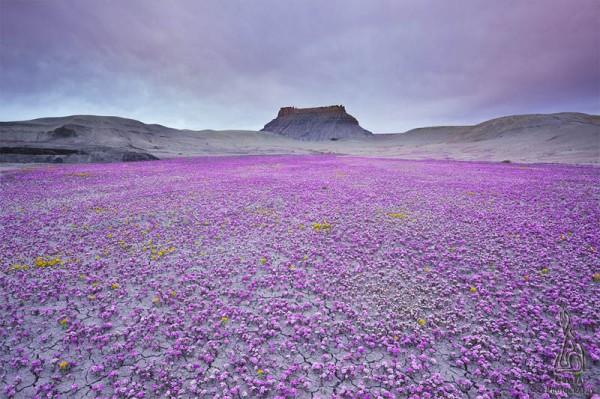 «Бесплодная земля Юты», фото: GUY TAL