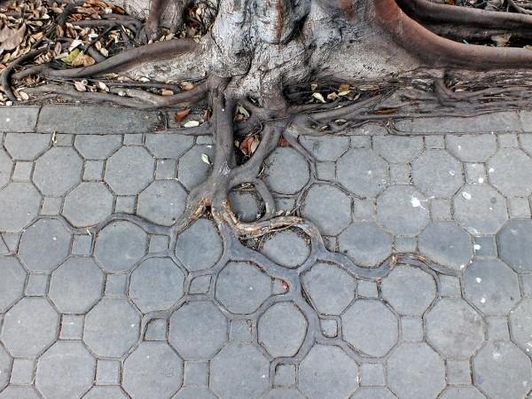 «Корни тротуара», фото: HORST KIECHLE