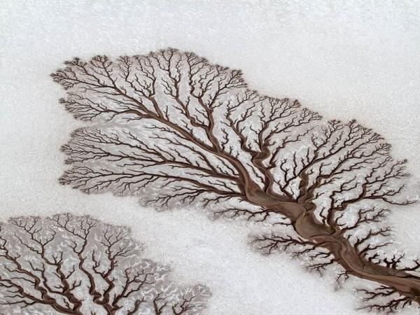 «Фрактальные рисунки высохших рек», фото: ADRIANA FRANCO (National Geographic)