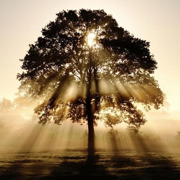 Солнце, дающее жизнь, сияет над деревом, пронизывая его своими лучами насквозь.