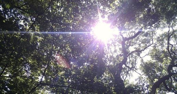 Солнце, которое дарит жизнь