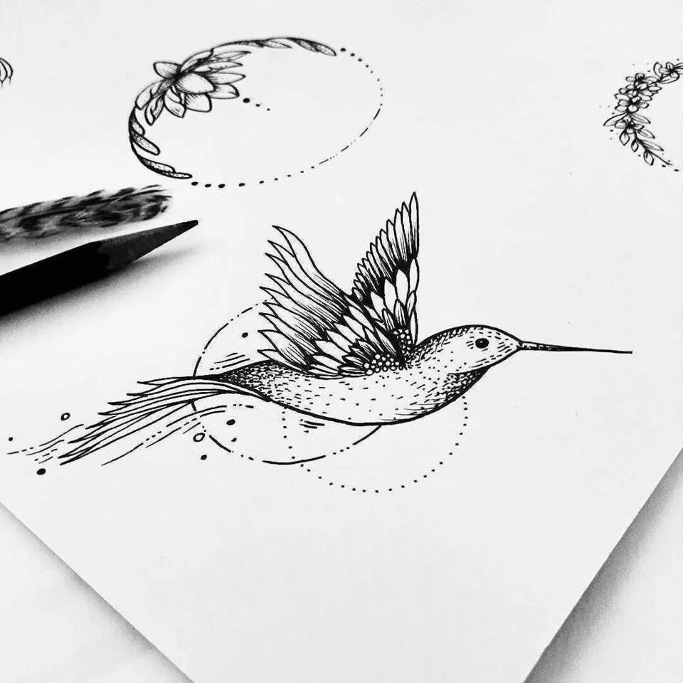 Графика колибри